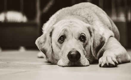 Comment contrôler un chien boulimique ?