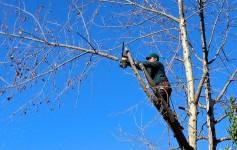 Comment effectuer les travaux d'abattage d'un arbre