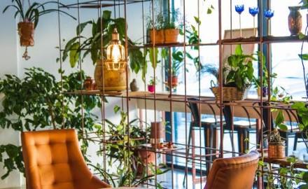 avantages d'une cloison végétale pour son espace intérieur