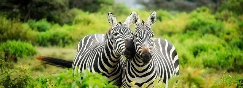 circuits écotouristiques au Kenya2