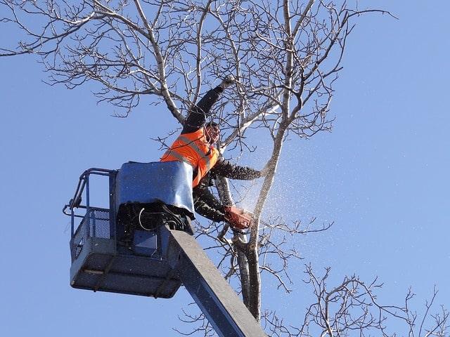 travaux d'abattage d'un arbre